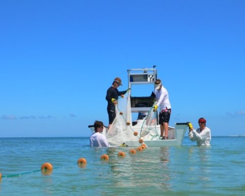 Researchers on a boat hauling fishing nets.